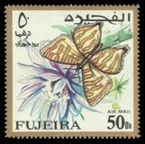Farfalla di Lycaenid, Spindasis scotti fotografie stock libere da diritti
