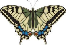 Farfalla di Machaon Fotografia Stock Libera da Diritti