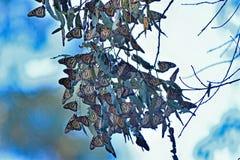 Farfalla di monarca fotografie stock libere da diritti