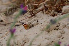 Farfalla di monarca che si siede sulla terra immagine stock libera da diritti