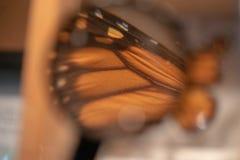 Farfalla di monarca sotto la lente d'ingrandimento immagine stock libera da diritti