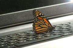 Farfalla di monarca sul concetto dell'energia pulita della tastiera del computer portatile fotografia stock libera da diritti