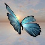 Farfalla di Morpho Immagine Stock