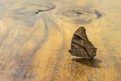 Farfalla di notte sulla tavola di legno Immagine Stock Libera da Diritti