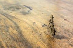 Farfalla di notte sulla tavola di legno Fotografia Stock