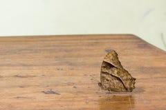 Farfalla di notte sulla tavola di legno Fotografie Stock