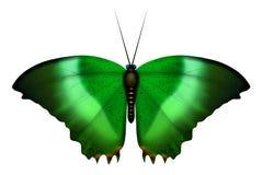 Farfalla di pavone Immagini Stock Libere da Diritti