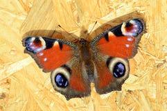 Farfalla di pavone che riposa sul fondo del compensato Immagine Stock
