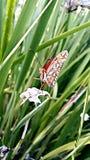 Farfalla di pulizia fotografia stock libera da diritti
