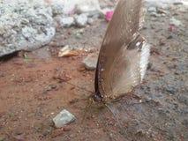 Farfalla di Ranti Immagine Stock Libera da Diritti