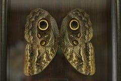 Farfalla di riposo Fotografie Stock