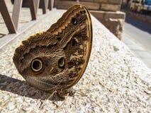 Farfalla di riposo fotografie stock libere da diritti