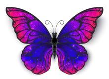 Farfalla di Tricolored su fondo bianco fotografie stock libere da diritti