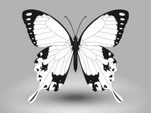 Farfalla di vettore Immagini Stock Libere da Diritti