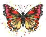 Farfalla di vettore in acquerello Immagine Stock