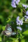 Farfalla di volo Fotografie Stock