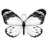 Farfalla dipinta a mano delle illustrazioni Fotografia Stock