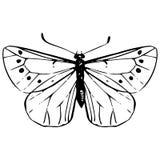 Farfalla disegnata a mano Fotografia Stock Libera da Diritti