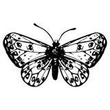 Farfalla disegnata a mano Fotografie Stock