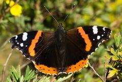 Farfalla e conclusione norvegesi di estate Fotografia Stock Libera da Diritti