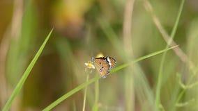Farfalla e fiore archivi video