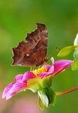 Farfalla e fiore Immagini Stock