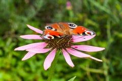 Farfalla e fiore Immagini Stock Libere da Diritti