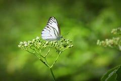 Farfalla e fiore immagine stock libera da diritti