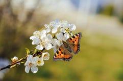 Farfalla e fiore Fotografia Stock Libera da Diritti