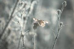 Farfalla e fiore Fotografie Stock Libere da Diritti