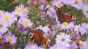 Farfalla e fiore video d archivio