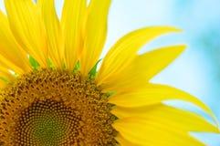 Farfalla e fiore bianco dell'universo Immagini Stock Libere da Diritti