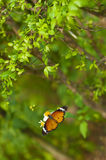 Farfalla e fiore bianco dell'universo sotto l'albero Immagine Stock