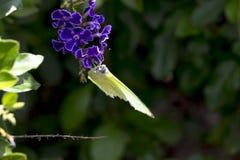 Farfalla e fiore in giardino Fotografia Stock