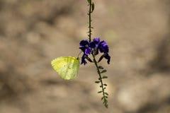 Farfalla e fiore in giardino Immagine Stock
