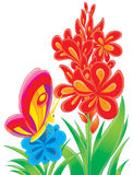 Farfalla e fiore rosso Immagine Stock