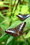 Farfalla e fogli Immagini Stock Libere da Diritti