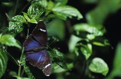 Farfalla e fogli Fotografie Stock Libere da Diritti