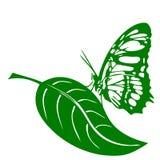 Farfalla e foglia Fotografie Stock