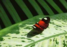 Farfalla e fogliame Fotografia Stock Libera da Diritti