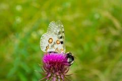 farfalla e insetto Immagine Stock