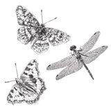Farfalla e libellula disegnate a mano Fotografia Stock Libera da Diritti