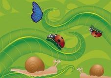 Farfalla e lumache della coccinella Immagini Stock Libere da Diritti