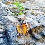 Farfalla e pianta Fotografia Stock Libera da Diritti