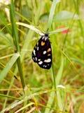 Farfalla e pianta in primavera 1 Immagini Stock