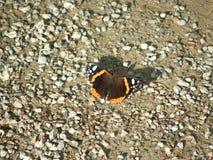 Farfalla e piccole pietre Immagini Stock Libere da Diritti