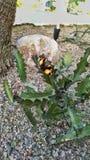 Farfalla e pietre Immagine Stock