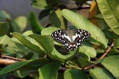 Farfalla ed albero Fotografia Stock Libera da Diritti