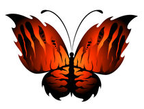 Farfalla esotica Immagini Stock Libere da Diritti