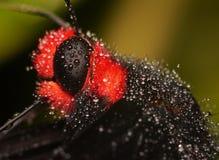 Farfalla, fine in su Immagini Stock Libere da Diritti